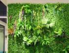 人造草坪仿真綠植物墻花樹藤軟裝室內門頭裝飾景觀設計