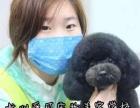 杭州爱可宠物美容培训学校,最新日韩技术零距离