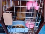 温州活体托运公司 宠物专车服务