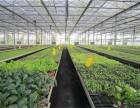 蔬菜大棚阳光板批发 蔬菜大棚阳光板供应