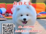 佛山萨摩耶价格 正规狗场繁殖多种纯种名犬 包健康签协议可送货