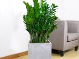武汉花卉市场花卉植物盆栽出租,武汉公司植物租摆