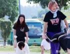 零基础舞蹈教师培训,白云区舞蹈教师专业进修班