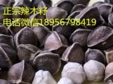 辣木籽价格/辣木籽多少钱一斤不看后悔
