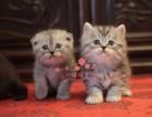 南宁人都到哪里去买加菲猫 南宁较便宜加菲猫价格