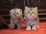 南宁人都到哪里去买加菲猫 南宁最便宜加菲猫价格