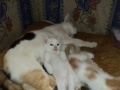 家猫小花猫喜欢的带走