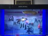 转让鱼和鱼缸