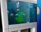 山东鱼管家水族店加盟