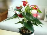 佛山植物植物租赁 佛山植物植物出租 佛山植物植物销售