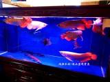 鱼缸上门维护修维护各种水族鱼缸更换滤材观赏鱼出售
