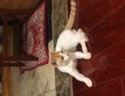 可爱橘猫找主人