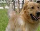 北川专业训犬基地,欢迎您!