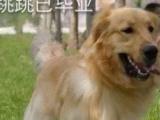 北川专业训犬基地,欢迎您