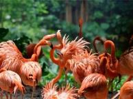 十一国庆郑州到广东长隆野生动物园国际大马戏珠海海洋王国旅游