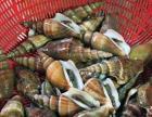零售批发生鲜海鲜
