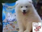 白沙纯种萨摩耶犬价格 白沙哪里能买到纯种萨摩耶犬