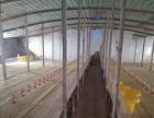 两栋养鸡厂可养鸡2万只左右,一栋机械出粪