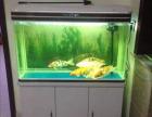 鱼缸清洗 鱼池清洗 专业技术 快速上门