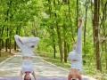 南阳倾舞国际瑜伽培训—流瑜伽、哈他瑜伽