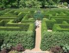 浙江金华大型环保绿植迷宫出租 大型震撼绿植迷宫租赁电话