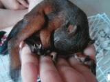 松鼠自家基地养殖