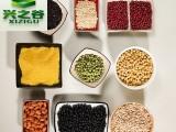 纯天然减肥食疗产品代加工 大麦苗叶减肥青汁冲饮 瘦身青汁