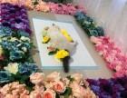 广州宠物殡葬服务地址