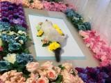 廣州寵物殯葬服務地址