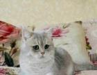 玉麟阁名猫种公借配