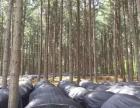 山林出租绿色开发