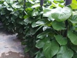 光明新区公明松岗办公室租花,绿植租摆,植物租赁,花场直销
