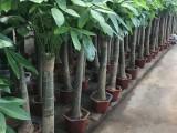 园林绿化养护植物墙庭院绿化花卉绿植销售施工养护