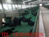 塑料羊地板 奶山羊地板 养殖专用塑料地板