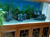 全昆明鱼缸鱼池清洗鱼缸维修