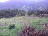 從化溫泉中田附近3.5畝果園平地永久轉讓