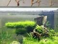 水草缸维护,生态鱼缸维护