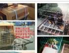 西安傲志宠物托运连锁机构