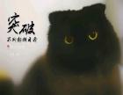 自家英短蓝猫黑猫出售