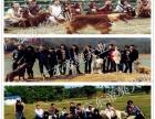 帝獒犬业繁殖基地直销大型犬圣伯纳犬 健康品相优良