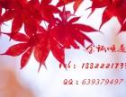 天津短期借款优势