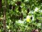 陈策楼镇程德岗葡萄园葡萄采摘开始了