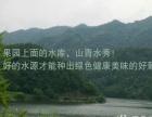 绍兴诸暨周边新鲜葡萄采摘 水果园李子红提 巨峰团购