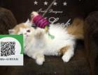 赣州哪里有宠物猫出售,赣州哪里有卖纯种加菲猫价格