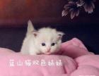 诚品犬舍-正规猫舍出售布偶猫加菲猫 纯种