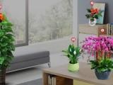室内外绿植盆栽出租批发零售绿化养护修剪铺草皮开荒除草