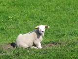 保定养殖羊加盟寻求投资养羊合作伙伴提供
