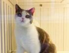 猫舍直销-品种齐全-批发零售世界高品质名猫英短美短