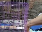 各种狗用笼子,跑笼展示笼,大小都有价格不等25起