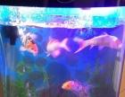 亚克力鱼缸和鱼